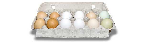 Et dusin egg